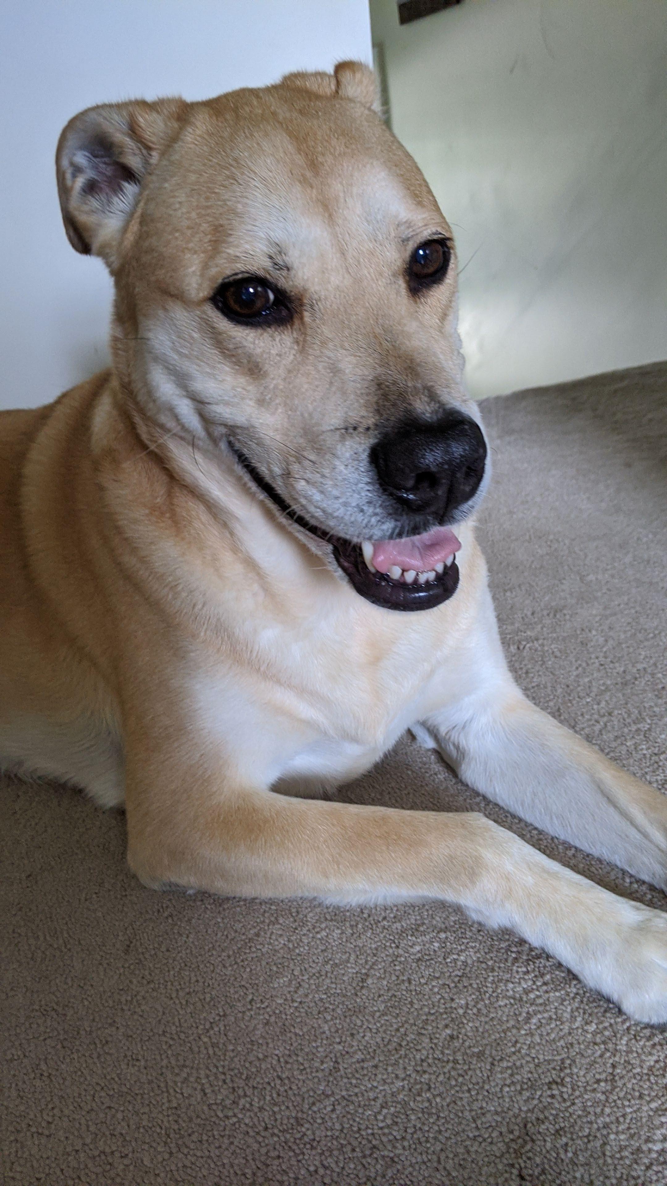 Duncan Dog for Adoption