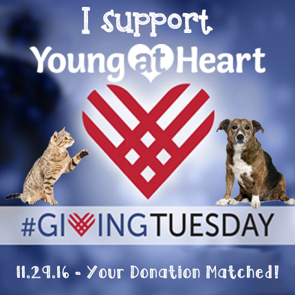 GivingTuesday Profile Pic