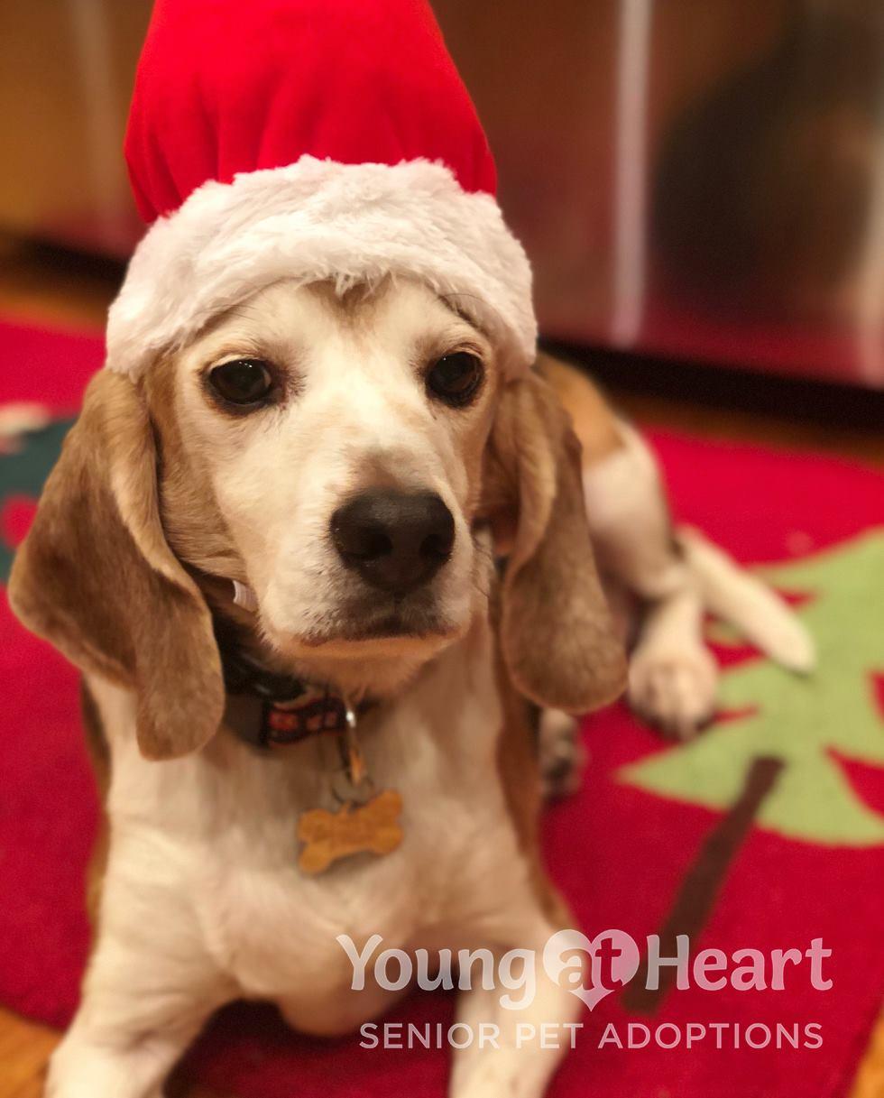 Barney Beagle