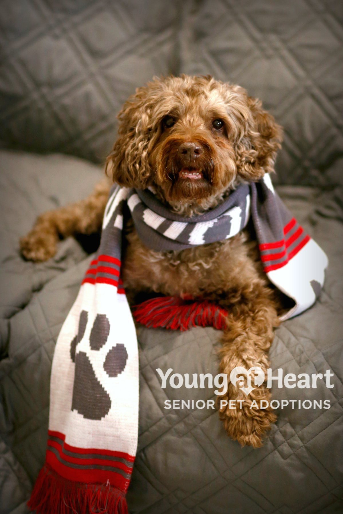 Young at Heart Constant Companion Program