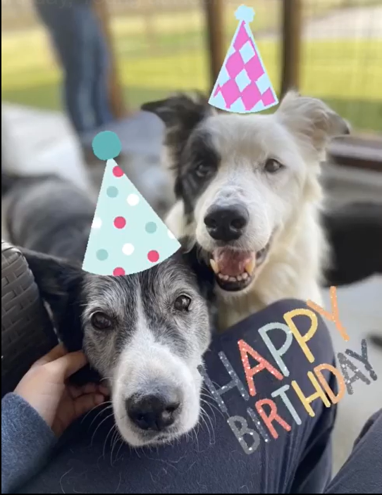 Happy Birthday Young at Heart Senior Pet Rescue