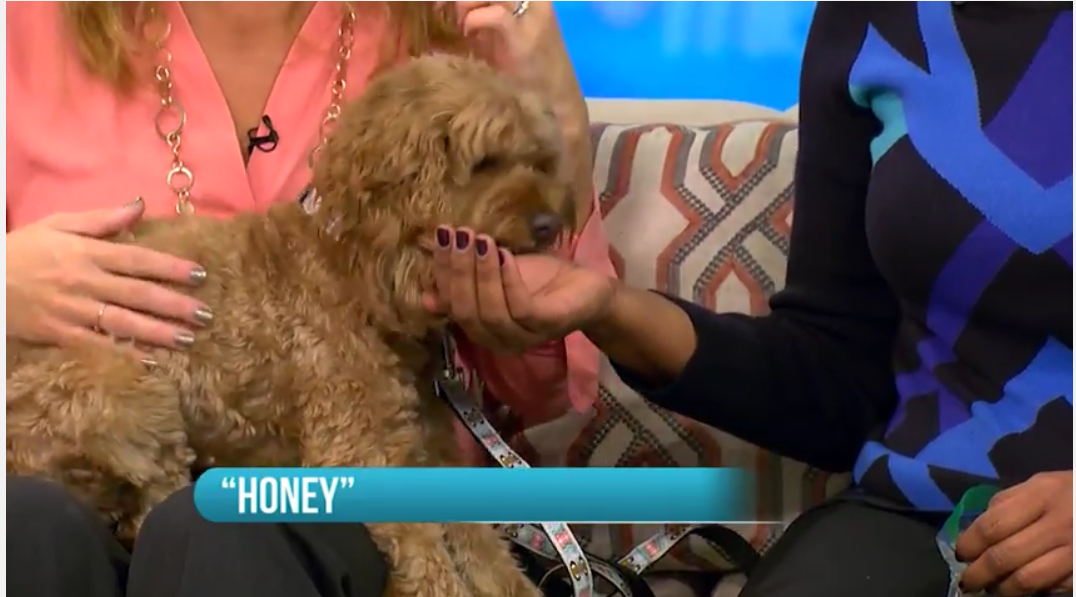 Honey on WCIU You and Me