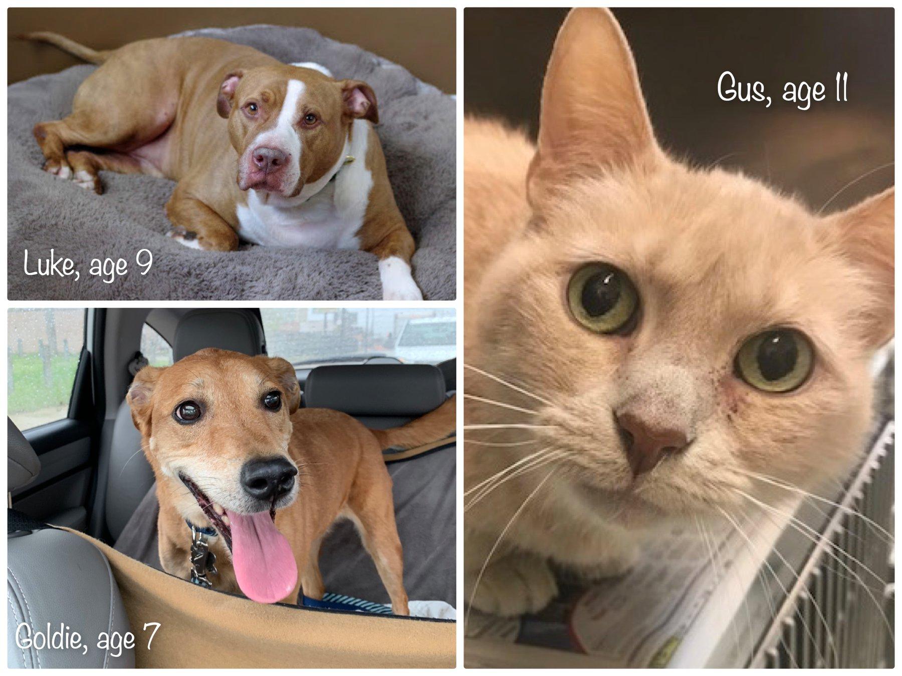 New Senior Pets