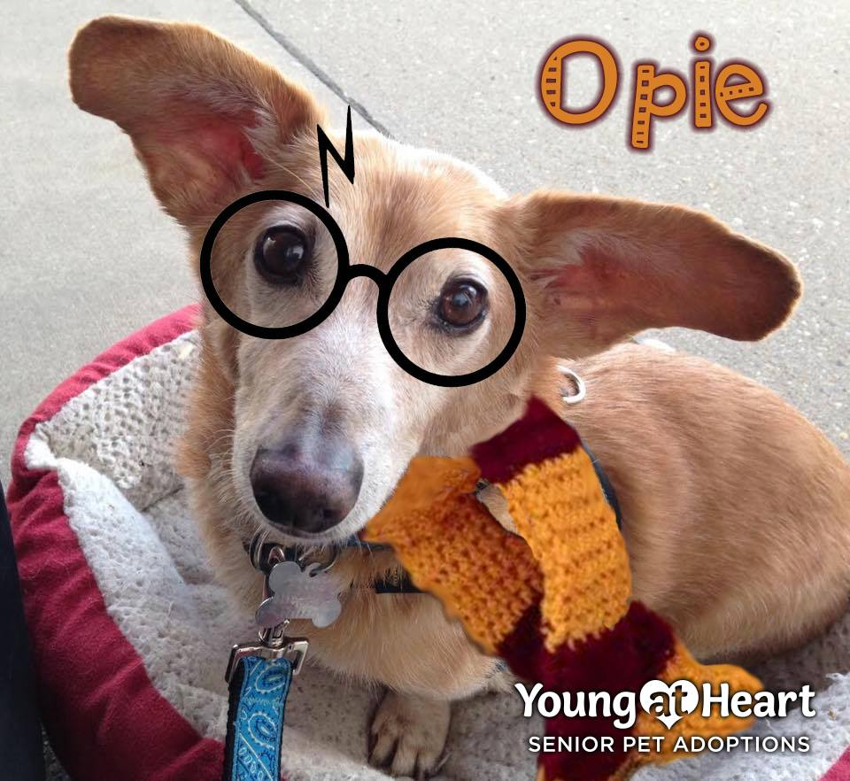 Opie as Harry Potter
