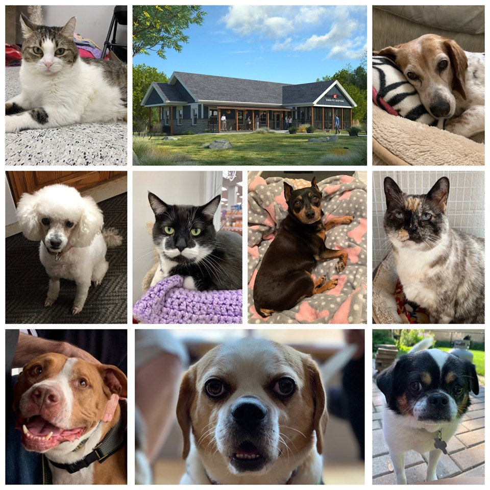 The Adoptable Senior Pets of Young at Heart Senior Pet Rescue