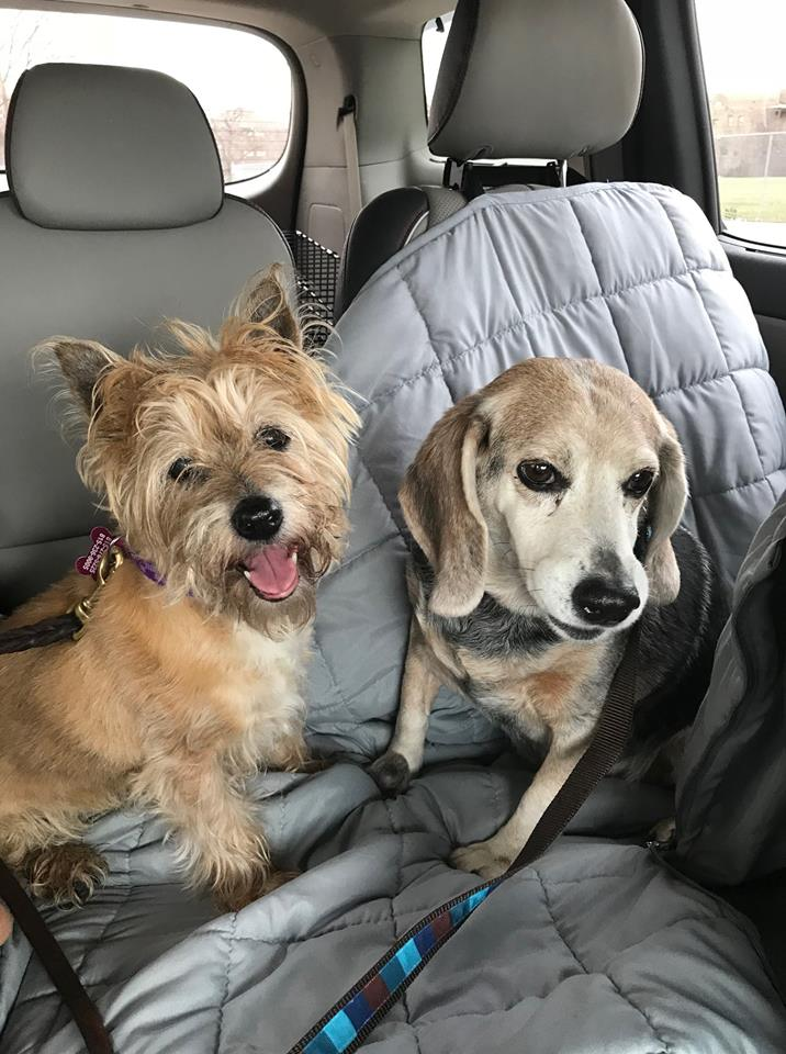 Shelby & Sassy