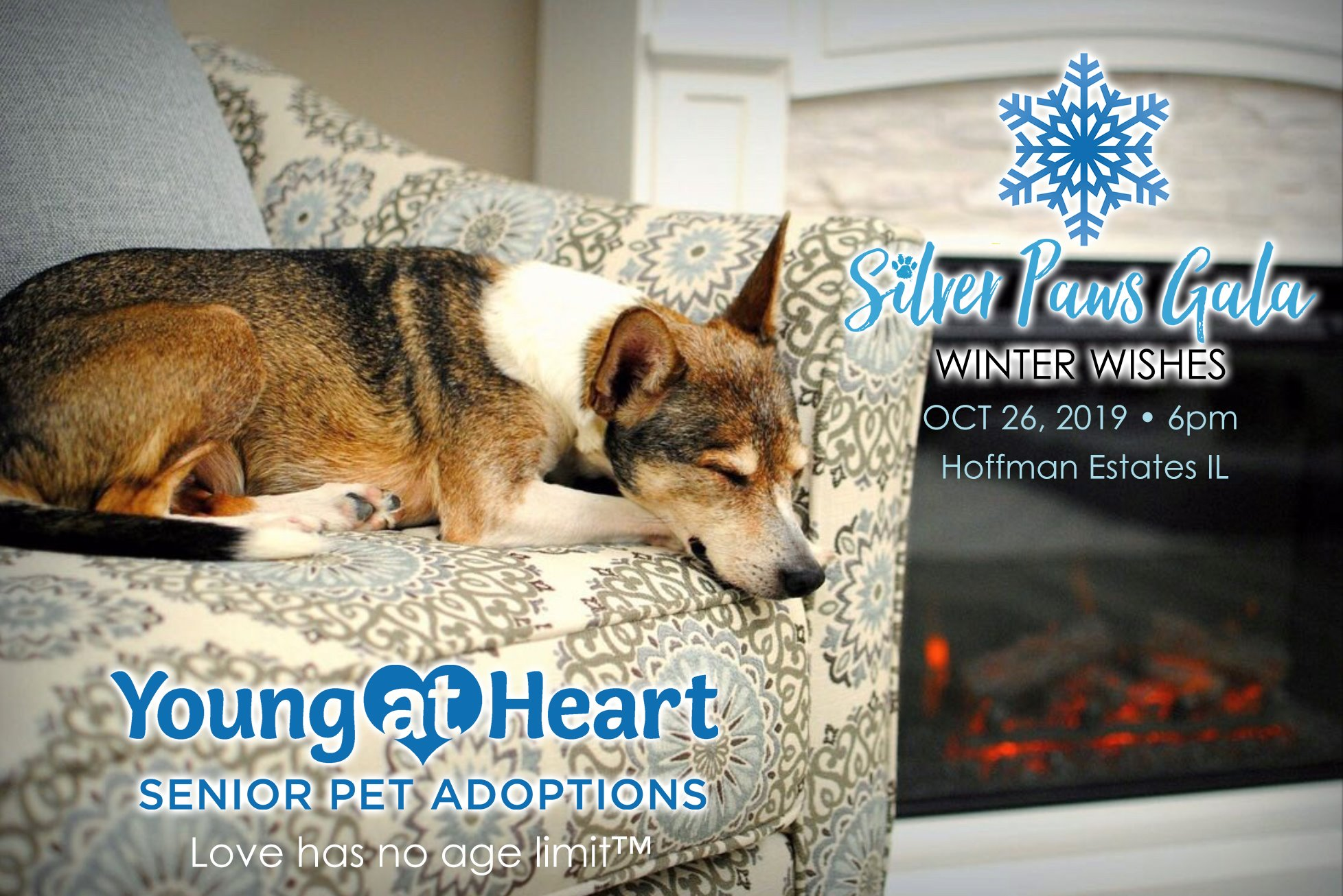 Young at Heart Silver Paws Gala 2019